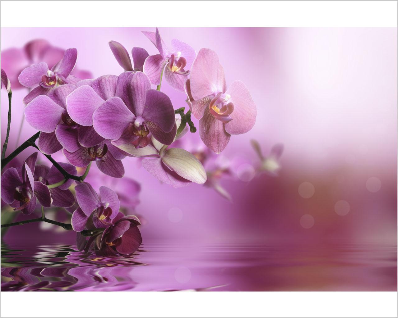 Orchidee sull acqua fiori stampa su tela for Orchidea acqua