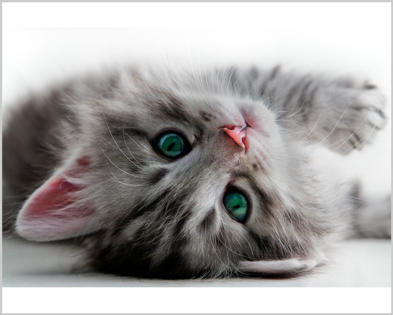 Stampa su tela-gattino