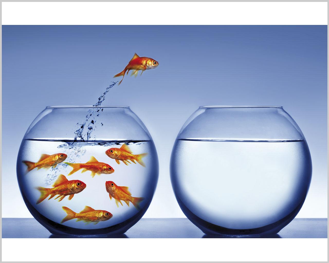 Pesci rossi nella boccia animali stampa su tela for Boccia pesci