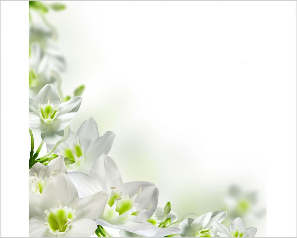 candidi fiori bianchi fiori stampa su tela