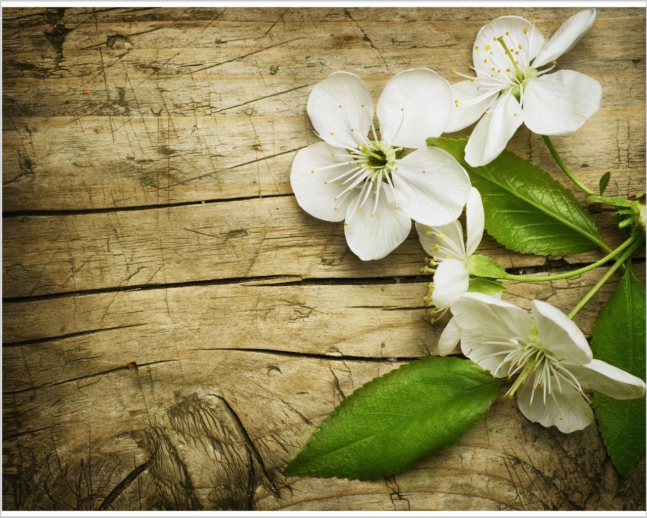 Profumati fiori di ciliegio fiori stampa su tela - Fiori gialli profumati ...